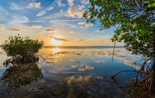 Colorful Sky Reflected In Water Of Mangrove Lagoon.