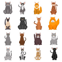 Different Cats Breeds Color Vector Icons Set. Flat Design