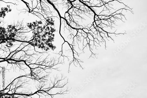 Obrazy szare szara-korona-drzew