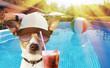 Leinwanddruck Bild - Hund mit Drink im Pool