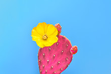 Cactus. Minimal Fashion. Creat...