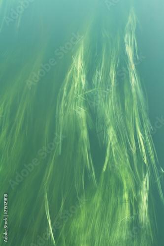 фотография  long underwater grass on the current. blurring
