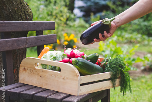 Gardener putting eggplant to wooden crate full of vegetables