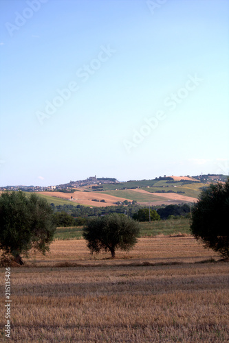 Deurstickers Blauwe hemel Italy,Fermo,landscape,hill,panorama,field,crops,sky,summer,countryside,rural,agriculture,view