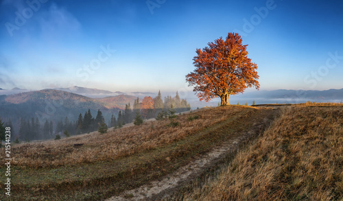 Fotobehang Diepbruine The first sun rays on lonely beech tree in foggy autumn landscape.