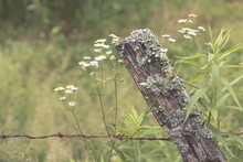 A Rustic Fence Post And Wire With Wildflowers