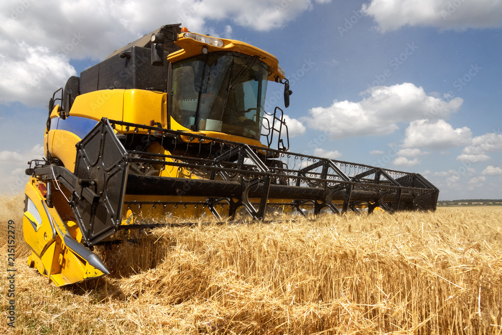 Fototapety, obrazy: Combine harvests wheat on a field in sunny summer day