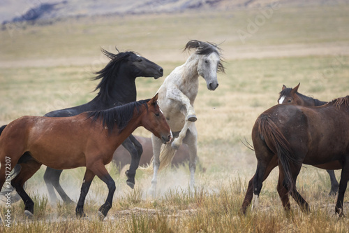 Great Basin Wild Horses. Poster