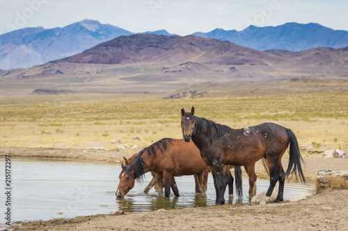 Photo  Great Basin Wild Horses.