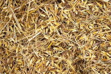 Rice Peel After Harvest And Husk Background