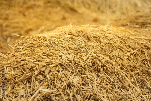 Fotografía  rice peel after harvest and husk background