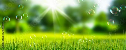Foto auf Gartenposter Lime grun seifenblasen in der natur