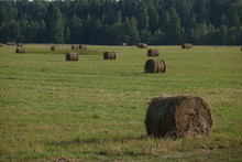 Round Hay Bales In Field With Trees, Sky And Clouds In Background