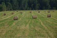 Round Hay Bales In Field With ...