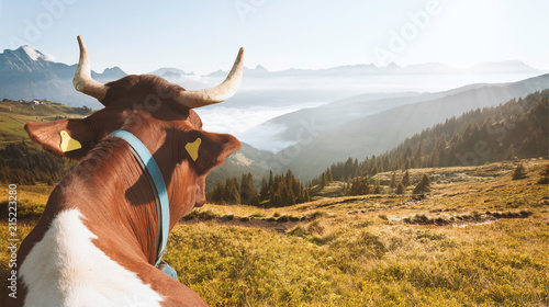 the happy cow in the alps