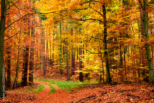 Deurstickers Herfst Yellow and green leafy path in the forest, Poland