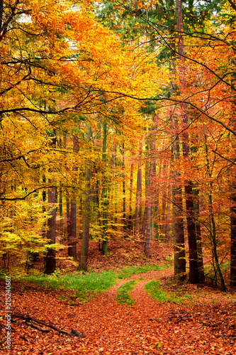 Poster Oranje Yellow and green path in the autumn forest, Poland