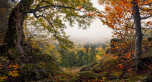 Panoramic Autumn Forest Landscape With View Of Mountain Misty Valley And Colorful Autumn Forest. Enchanted Autumn Foggy  Forest With Red And Yellow Falling Leaves On The Ground. Window To Nature