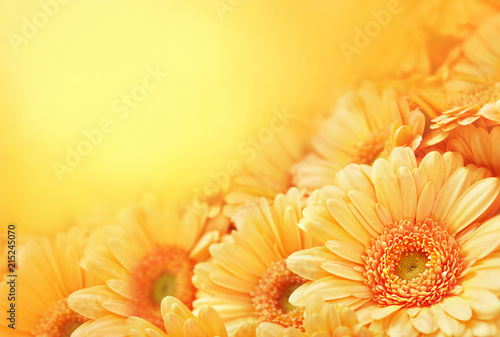 Aluminium Prints Gerbera Summer/autumn blossoming gerbera flowers on orange background, bright floral card, selective focus