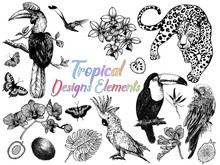Set Of Hand Drawn Sketch Style Exotic Birds, Animals, Butterflies, Plants And Fruits Isolated On White Background. Vector Illustration.
