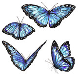 Fototapeta Buterfly - blue butterflies design, isolated on a white background