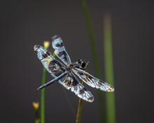 Dragonfly Resting Near A Pond.