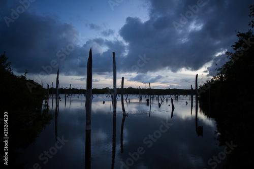 Aluminium Prints Dark grey Bavaro Swamp