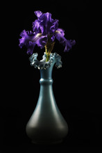 Purple Bearded Iris In A Vase