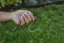 Snake In Child's Hand