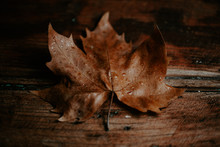 Wet Autumn Leaf On A Wooden Ta...