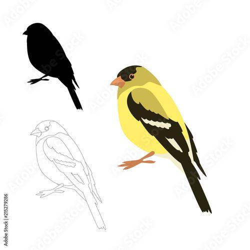 gold finch bird vector illustration flat style Poster Mural XXL