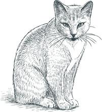 Sketch Of A Gray Domestic Cat
