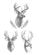 Vector Set Of Vintage Deer Heads Isolated On White. Hand Drawn Illustrations Of Engraved Animal Portrait