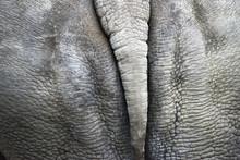Rhinoceros Bottom