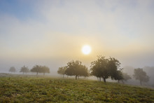Countryside With Apple Trees In Fields And The Sun Glowing Through The Morning Mist In Grossheubach In Bavaria, Germany
