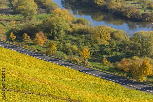 Poster Landschap River Landscape with Colorful Vineyards in Autumn, Volkach, Alte Mainschleife, Mainfranken, Franconia, Bavaria, Germany