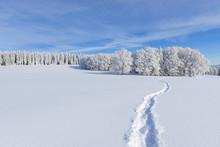 Snow Covered Winter Landscape With Snowshoe Trail, Schauinsland, Black Forest, Freiburg Im Breisgau, Baden-Wurttemberg, Germany