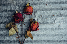 Three Dried Up Red Roses On A Metallic Background