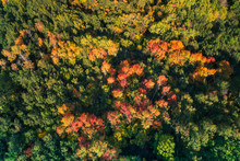 Aereal View Of A Forest In Autumn