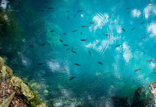 Foto  Clear blue water at radium springs