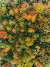 Aerial Drone Image Of A Forest...