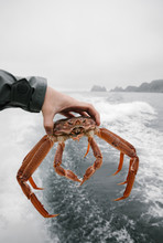 Man Holds Crab In The Hand