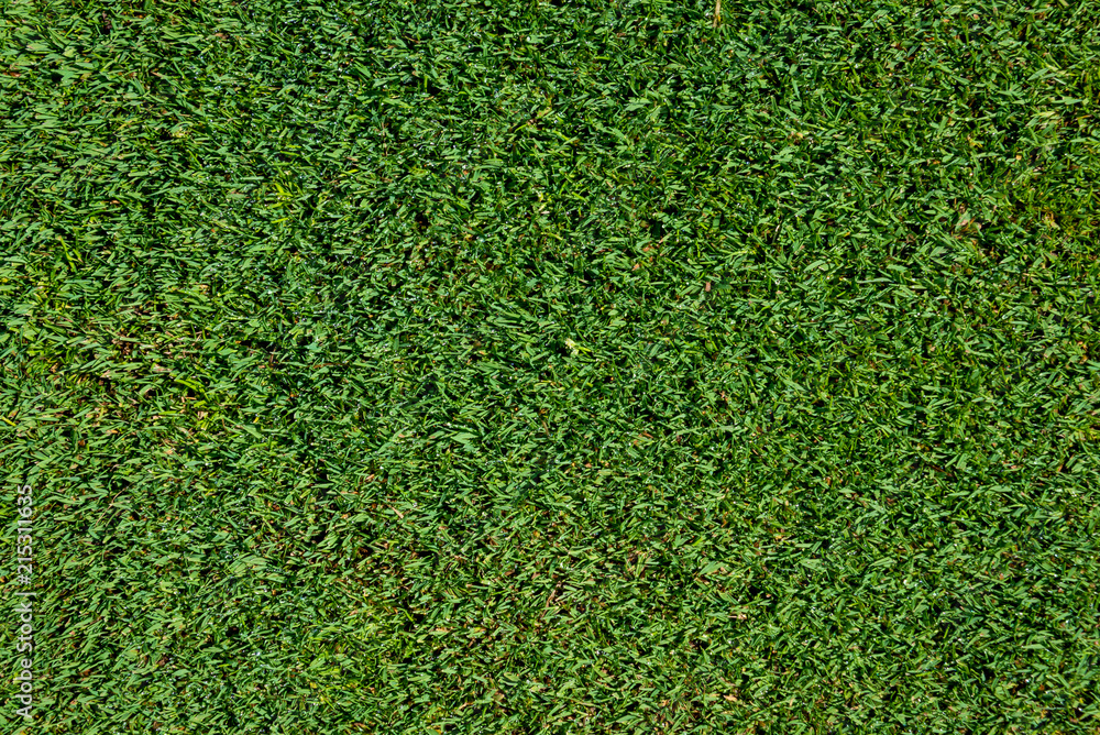 Fototapety, obrazy: Top view of short golf putting green grass as a background
