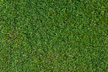 Top View Of Short Golf Putting Green Grass As A Background