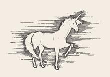 Beautiful Unicorn Wind Vector Illustration Sketch