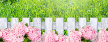 Springtime Or Summer Background With Wooden Fence In Shabby Chic Style, Hydrangea Flowers And Grass