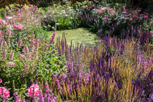 Beautiful Flowering Garden With A Pond/ Beautiful Flowering Garden With A Pond Surrounded By Colorful Flowers. Landscape Design With Water Objects.