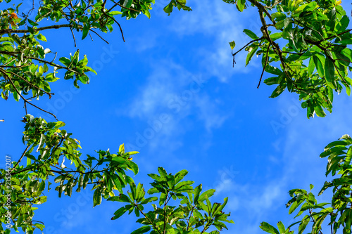 Fotografie, Obraz  Colorful autumn leaves against blue sky background
