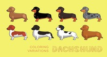 Dog Dachshund Coloring Variati...