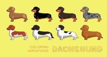 Dog Dachshund Coloring Variations Vector Illustration